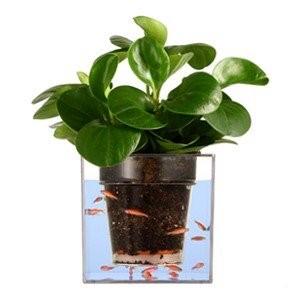 استفاده از آکواریوم به همراه گیاه
