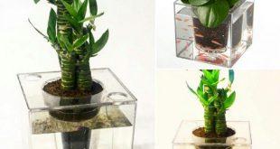 استفاده از گیاهان متنوع برای گلدان آکواریومی