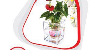 خرید آنلاین و ارزان گلدان آکواریومی