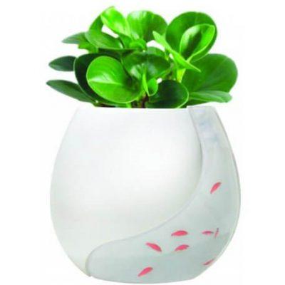 گلدان آکواریومی چیست؟